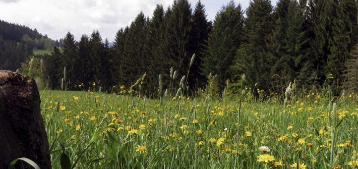 Auf Entdeckungstour durch den Schwarzwald #BloggerWGSchwarzwald